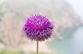 Bush of a burdock Royalty Free Stock Photo
