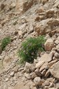 Bush in The Desert Background Royalty Free Stock Photo