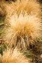 A bush of dry grass in the park Royalty Free Stock Photo