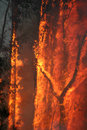 Bush Fire Stock Photos
