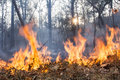 Bush fire destroy tropical forest Royalty Free Stock Photo