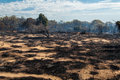 Bush Fire Royalty Free Stock Photo