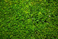 Bush green background Royalty Free Stock Image