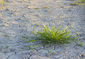 Bush of  green grass and the dry earth. Stock Photo