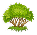Bush with green leaves eps illustration isolated on white background Stock Photography
