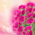 Bush of pink roses on defocused background Stock Photos