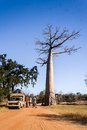 Bush taxi and baobab Royalty Free Stock Photos