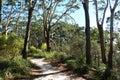 Bush track through Jervis Bay National Park Australia Royalty Free Stock Photo