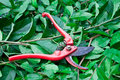 Bush trimmers on green leaf Stock Photography