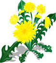 Bush of yellow dandelions. Stock Photography