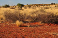 Bush and yellow grass, kalahari Royalty Free Stock Photography