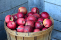 Bushel of michigan apples a red Stock Image