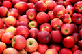 Bushel of Red Apples Royalty Free Stock Photo