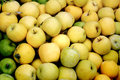 Bushel of Yellow Apples Royalty Free Stock Photo
