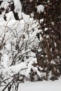 Bushes covered with snow in Moscow park in winter season Royalty Free Stock Photo