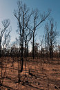 After the bushfire this scene comprising parched earth and burnt trees was captured following recent bushfires in new south wales Stock Photography