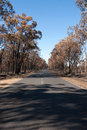 After the bushfire this scene comprising parched earth and burnt trees was captured following recent bushfires in new south wales Stock Photo