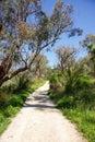 Bushland Walk Royalty Free Stock Photo