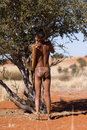 Bushman san hunter while showing the means of hunting in the kalahari desert of namibia Royalty Free Stock Photography