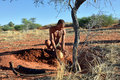 Bushmen hunter in the kalahari desert namibia jan buries ostrich egg with water san people also known as are members of various Royalty Free Stock Photos