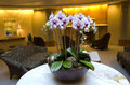 Business building and hotel lobby was decorated with beautiful orchid flowers luxury furniture Royalty Free Stock Images