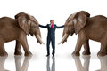 Business challenge mediation concept with businessman and elephants on white background Stock Images