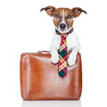 Business dog Royalty Free Stock Photos