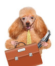 Business dog Stock Photos