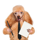 Business dog Royalty Free Stock Image