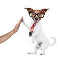 Business dog high five Royalty Free Stock Photo