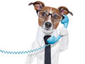 Business dog on the phone with a tie and glasses listening carefully Royalty Free Stock Photos