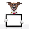 Business dog tablet pc ebook touch pad Stock Images