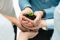 Business growth concept closeup of businesspeople hand holding plant together Stock Photography