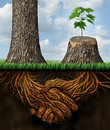 Business help and support concept as a tall tree next to a sick stump with a new growth of hope emerging in cooperation and Stock Images