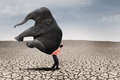 Business leader carry elephant on dry ground businessman lifting big leadership concept Royalty Free Stock Image