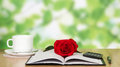 Business lunch in cafe coffee notebook red rose on a little table Royalty Free Stock Image