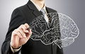 Business man drawing human brain diagram Royalty Free Stock Image