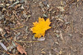 Business metaphor your product shouldn't be perfect but must be different one single yellow leaf on the soil background Royalty Free Stock Photography