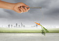 Business motivation close up of hand holding stick with carrot dangling on rope Stock Images