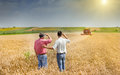 Business partners on wheat field peasant and men talking during harvesting Stock Photography