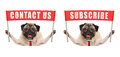 Business pug dog holding up red banner sign with text contact us and subscribe Royalty Free Stock Photo