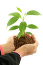 Business woman holding baby plant Royalty Free Stock Photo