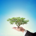 Businessman hand holding big tree with blue sky corporate social responsibility or csr concept Royalty Free Stock Photos