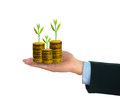 Businessman holding fresh green small tree on golden coins