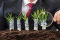 Businessman holding magnifying glass in front of money plants Royalty Free Stock Photo