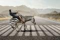 Businesswoman Ride Zebra . Mix...