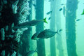 Busselton Jetty: Underwater Reef with Fish Royalty Free Stock Photo