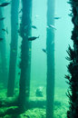 Busselton Jetty: Underwater Reef Royalty Free Stock Photo