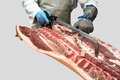 Butcher is cutting pork carcass with hand saw and using safety metal gloves and metal hook isolated Stock Photography