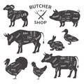 Butcher shop. Cute, funny pets, animals. Agricultural meat farmer`s market.